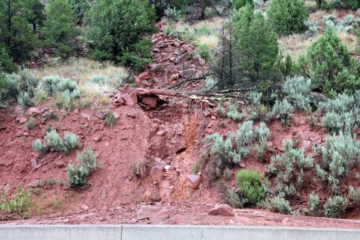 tree down after mudslide