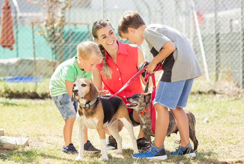 Garfield County approves grants for local animal shelters