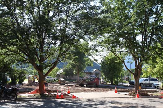 trees near parking lot