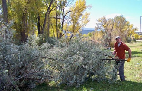 Jason Pooler, of Rifle Colorado, crew leader with Roaring Fork Outdoor Volunteers, works on stacking cut Russian olive during the Roaring Fork Outdoor Volunteer's Tamarisk / Russian Olive volunteer work day at the Rifle Rest Area.